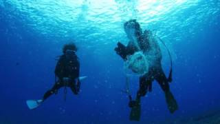 下地島エリアの人気ダイビングポイント ・アントニオガウディ ・通り池 ...