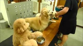 Chinese Dogs Pray Before Dinner