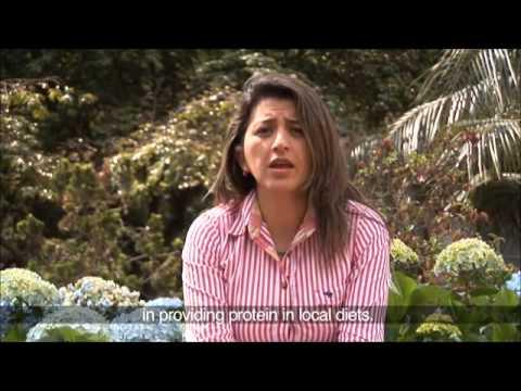 GSI/UNDP Pilot Project in Mataven, Colombia (English Subtitle)