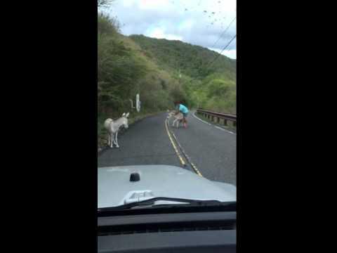 "Donkey Show ""riding dirty"""