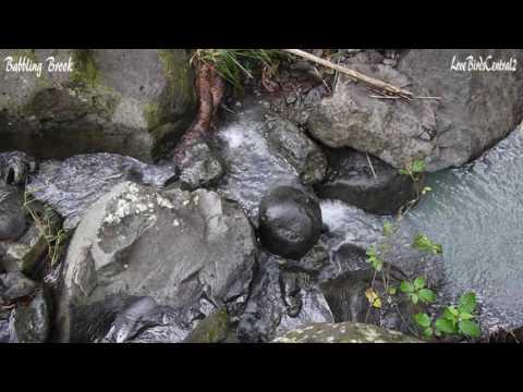 Babbling Brook #1 | Hawaii | Relax | Meditate | LoveBirdsCentral2 #1