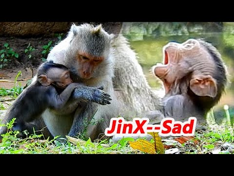 SAD TIME_ _SAD MILK...!! BABY MONKEY JIN ASK MILK COS HUNGRY MUCH | JADE NOT GIVE MILK.