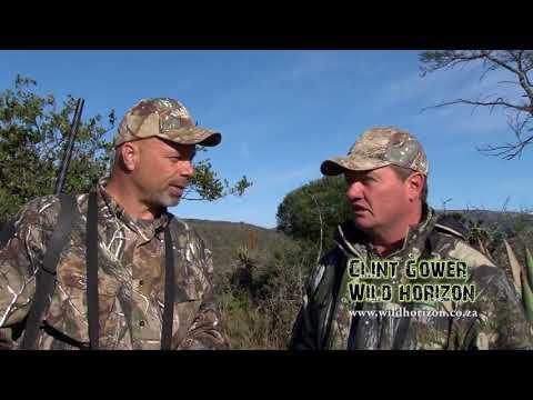 Wild Horizon 2012 kudu and Springbok