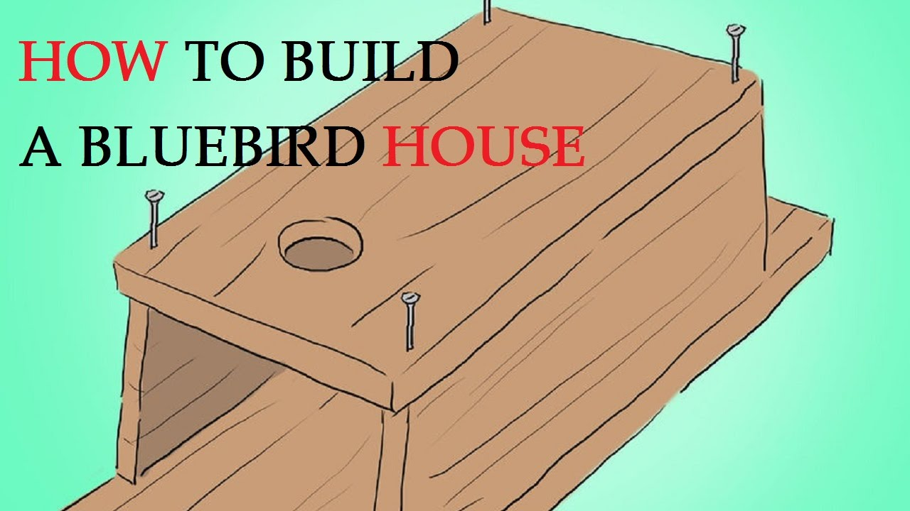 how to build a bluebird house youtube. Black Bedroom Furniture Sets. Home Design Ideas
