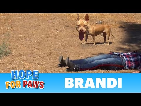 Coyote, Pit Bull, rescuer on the ground and behaviors I have never seen before!