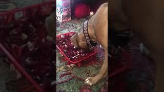 Wynn with snuffle mat