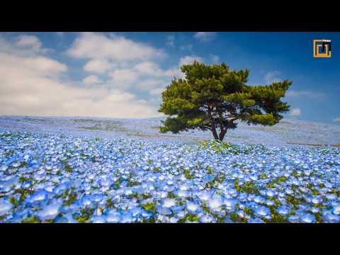 Beautiful Japanese Music 2018 || Japanese Kyoto || 【癒し効果】心がやすらぐ、和風曲メドレー #5