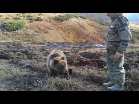 Это Россия, детка! Мужики кормят медведя с рук. Самый обычный день в России!