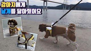강아지 하네스 리뷰 애견용품 구매리뷰 engsub