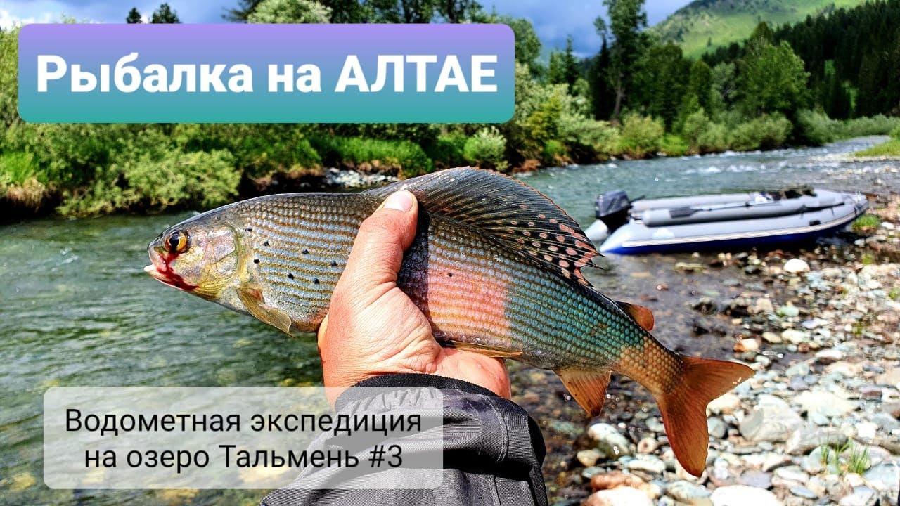 Рыбалка на Алтае #3/Вот это я понимаю ЖОР хариуса/Три шедевральных блюда из рыбы/ Готовим на костре.