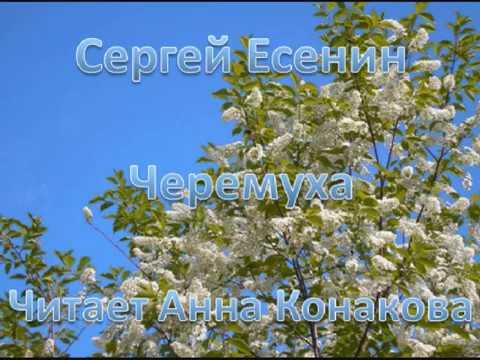 Изображение предпросмотра прочтения – АннаКонакова читает произведение «Черёмуха» С.А.Есенина