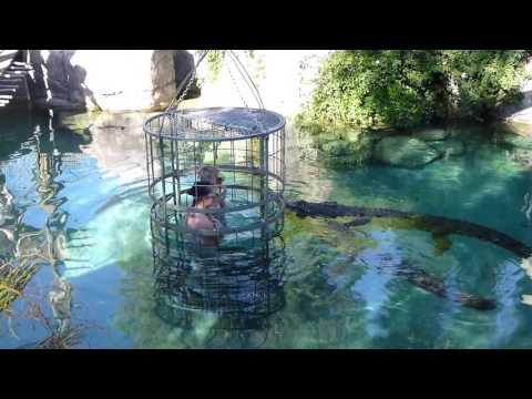 Crocodile Cage Diving with Latitude 31° - Cango Wildlife Ranch, Oudtshoorn, South Africa