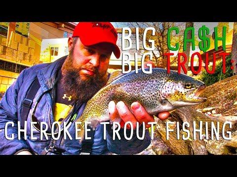 Big Cash & Big Trout: Cherokee Trout Fishing