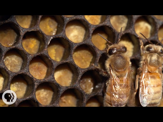 Honey Bees Make Honey ... and Bread? | Deep Look