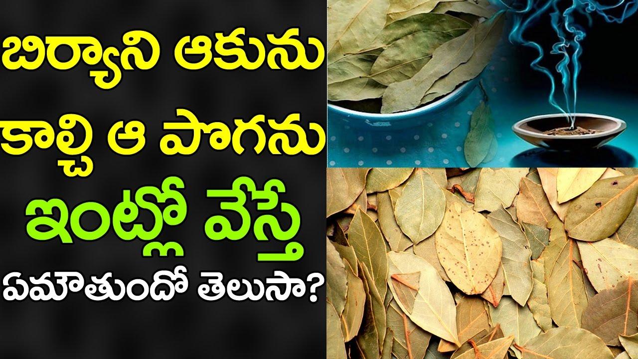Wow Amazing Benefits Of Burnt Bay Leaves Uses Of Biryani Leaves Aromatherapy Vtube Telugu Youtube