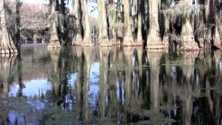 Passage into the Primeval:  Caddo Lake, Texas