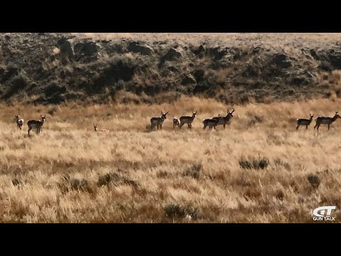 Bucket List: Public Land Antelope Hunting In Wyoming | Gun Talk