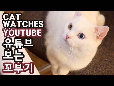 유튜브 보는 꼬부기 CAT WATCHES YOUTUBE