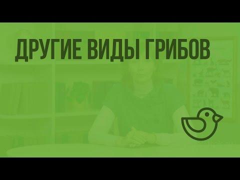 Сморчковая шапочка - первый весенний вкусный гриб в Московском парке