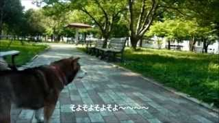だって柴犬なんだもん屯田西公園編 SHIBAINU MOVIE