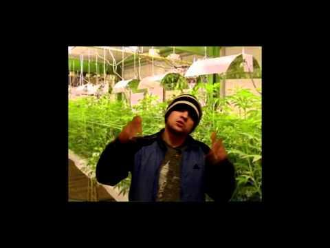 Марихуана - Все наркотики