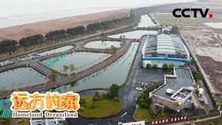 《远方的家》 20200605 长江行(104) 万里长江归大海| CCTV中文国际