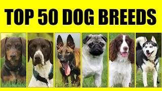 Top 50 Dog Breeds || Most Popular Dog Breeds in the world