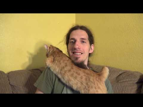 Cats n Craziness - Reading Comments