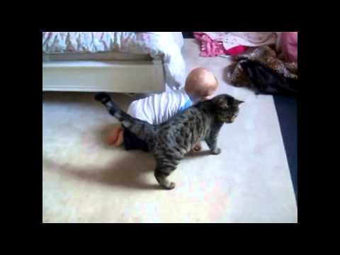 Babies Vs. Cats Montage: Endless Horror