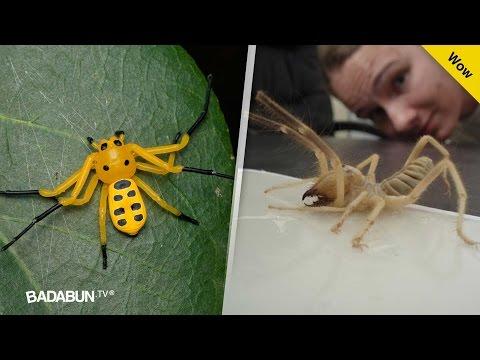 Los 13 insectos más extraños del mundo. Por el #3 pagan millones de dólares