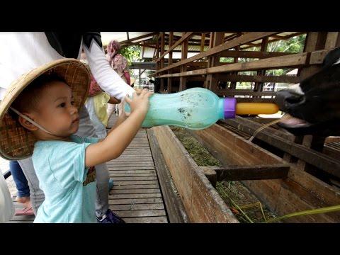 ❤❤ Liburan!!! main sama kelinci | memberi makan sapi | menangkap ikan | naik kuda (eps 04)