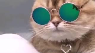 Все поющие котята для вас