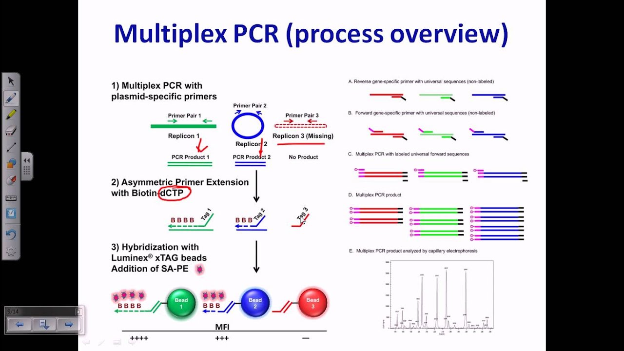 polymerase chain reaction diagram afci wiring multiplex pcr youtube