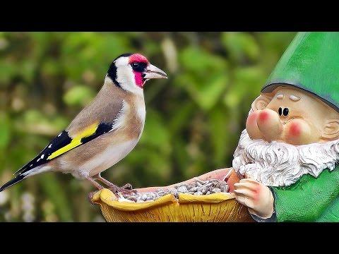 Garden Birds -  Gartenvögel - Oiseaux de Jardin - Tuinvogels - Trädgårdsfåglar