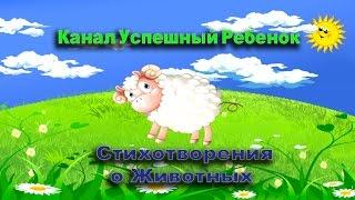 Детские стихи для детей 3 4 5 про животных Стих о животных Развивающий Мультфильм Животные для детей