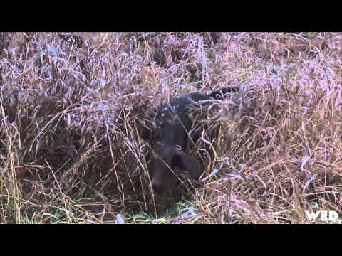 Hunting Pheasant In Ontario