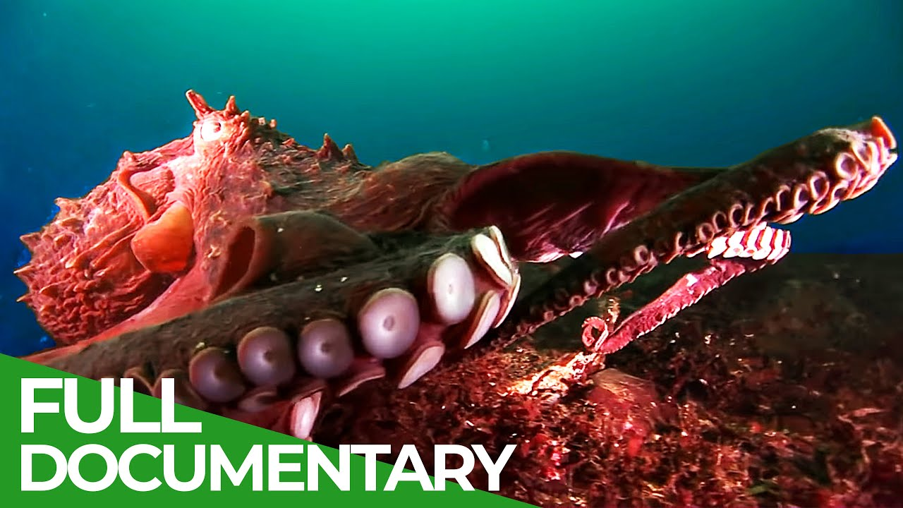 Squids & Octopuses - Mysterious Hunters of the Deep Sea | Free Documentary Nature