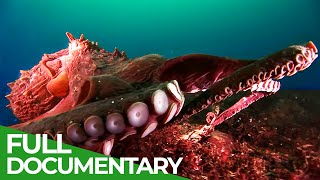 Squids & Octopuses  Mysterious Hunters of the Deep Sea | Free Documentary Nature