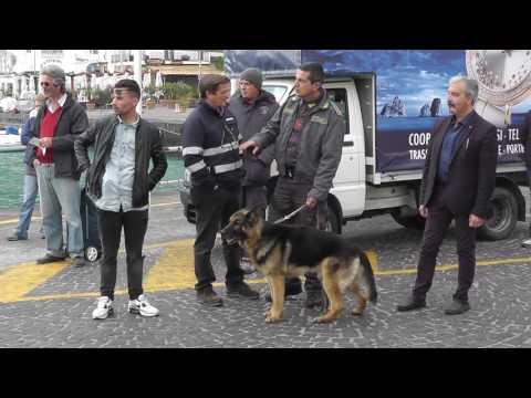 Controlli antidroga della Guardia di Finanza con unità cinofila a Capri