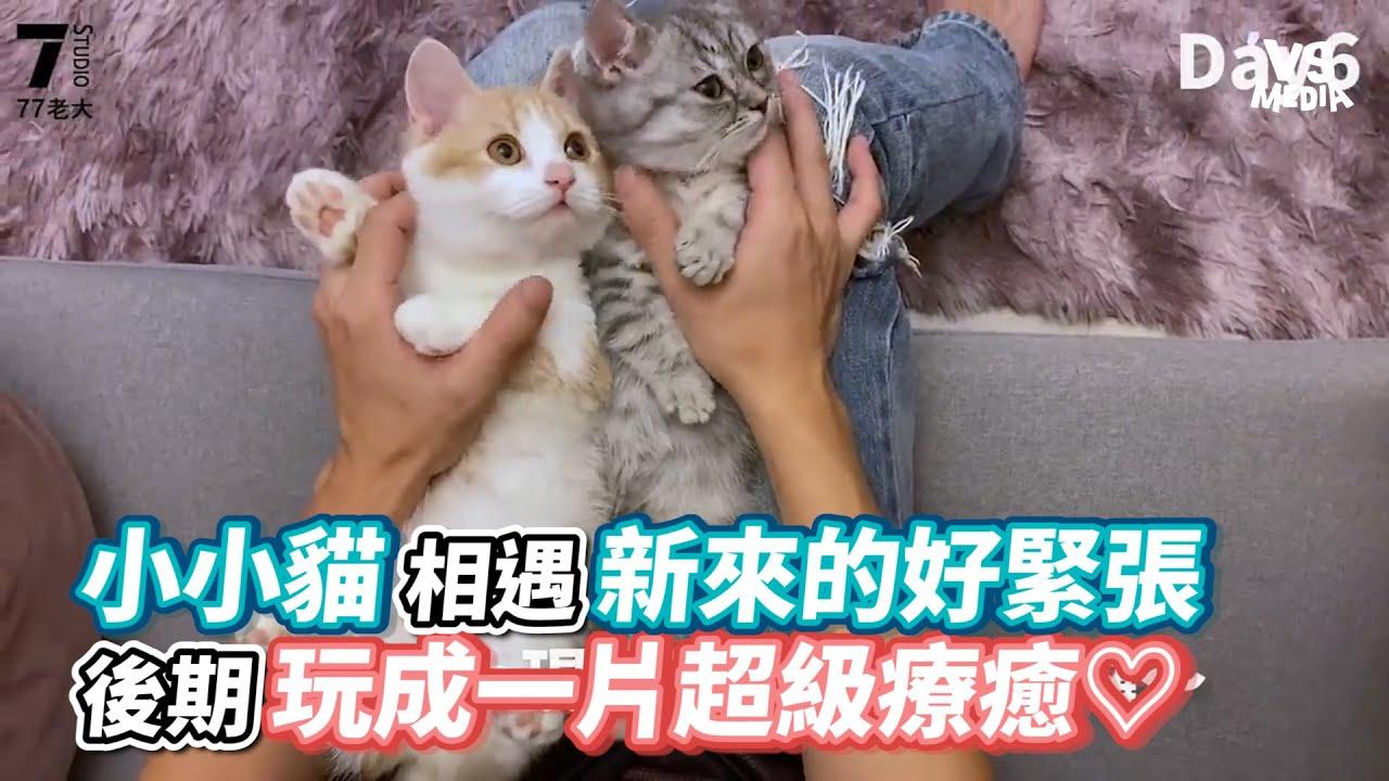 小小貓相遇新來的好緊張後期玩成一片超級療癒♡《VS MEDIA x 77老大》