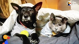 Blind Cat and Dog Go On Adventures Together | The Dodo