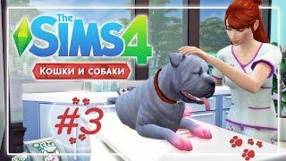 The Sims 4: Кошки и собаки | # 3 - Ветеринарная клиника и беспризорный пес