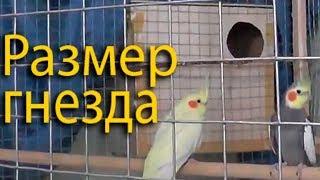 Разведение попугаев осень зима 2017 №2 Размеры домика - дуплянки гнезда для волнистиков и корелл