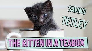 Saving Tetley, the Tiny Kitten in a Teabox thumbnail