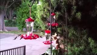 STOP! Before buying Walmart Hummingbird Feeder, Must See