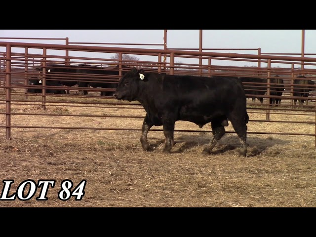 Mead Angus Farms Lot 84