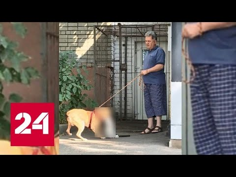 Хозяин пса устроил жестокую расправу над кошкой у подъезда дома в Курске - Россия 24