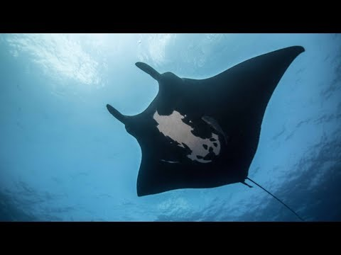 Majestic Mantas  - Full Episode