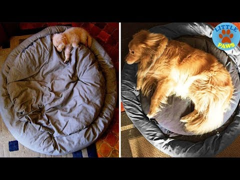 Adorable Before & After Photos Of Baby Dogs Growing Up