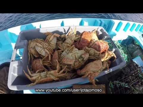 Pesca Açores, Fishing crab with trap / Pesca á Sapateira nos Açores,